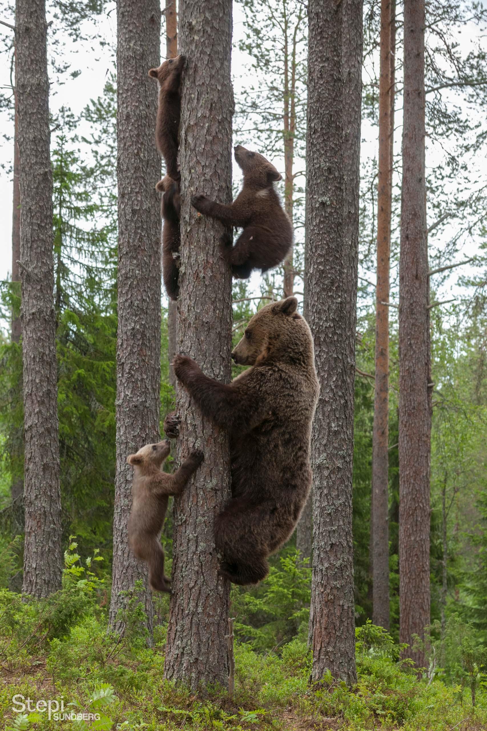 Valokuvaaja Stepi Sundberg luontokuva nelospennut
